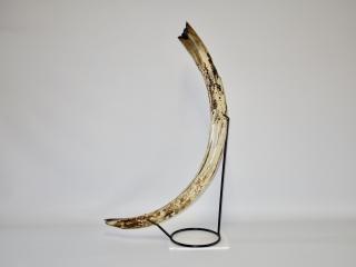 Mammoth Tusk
