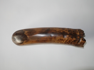 A Beautiful Tip of a Tusk of a Woolly Mammoth
