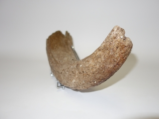 A Fantastic Hornpit of a Pleistocene Wisent