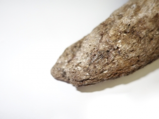 A Fantastic Hornpit of a Pleistocene Wisent