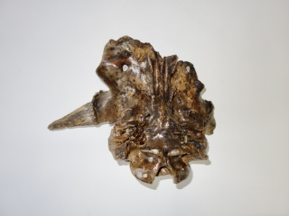 A Beautiful Cranium of an Irish Elk