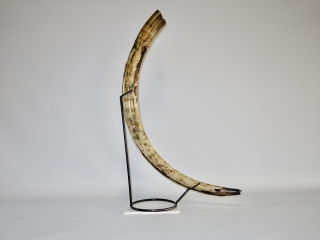 A Fabulous Complete Tusk of a Female Woolly Mammoth