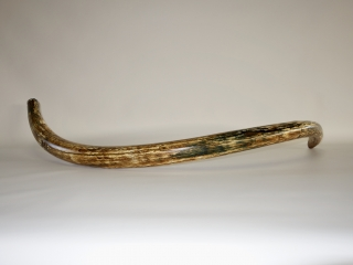 A Stunning Complete Tusk of a Female Woolly Mammoth