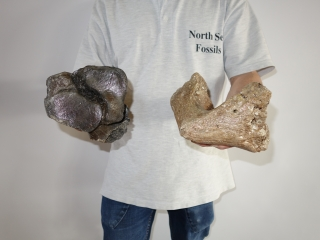 A Bargain Lot of 6 Partial Woolly Mammoth Bones