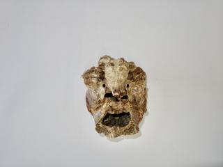 A Beautiful Cranium of a Reindeer