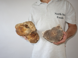 A Bargain Lot of 6 Partial Woolly Mammoth Fossils