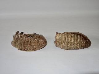 A Fantastic Pair of M2 Molars of a Woolly Mammoth