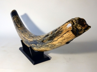A Beautiful Half Tusk of a Female Woolly Mammoth