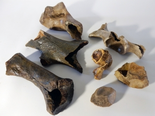 A Bargain Lot of 7 Bones of Woolly Rhinoceros