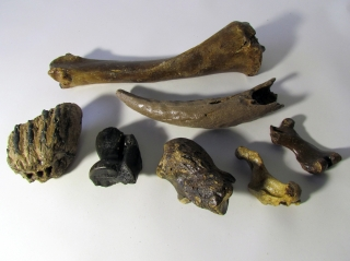 A Bargain Lot of 6 Fossils of Various Pleistocene Mammals