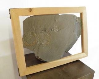 A Good Ammonite