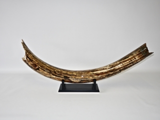 A Magnificent Half Tusk of a Woolly Mammoth