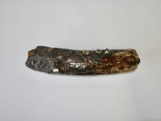 A Good Piece of  Tusk of a Woolly Mammoth