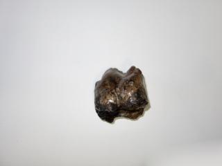 A Rare and Beautiful P2 Molar of a Pro Deinotherium Bavaricum