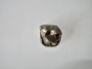 A Wonderful and Rare Molar of a Brontotherium