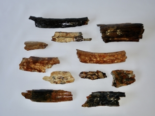 A Bargain Lot of 11 Bark Pieces of Woolly Mammoth