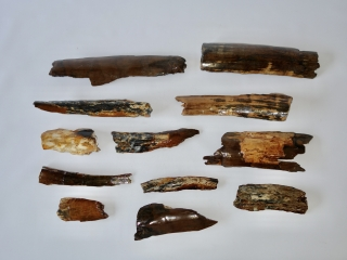 A Bargain Lot of 12 Bark Pieces of Woolly Mammoth